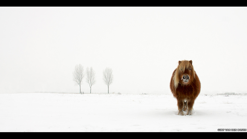 © Gert van den Bosch, Winner, Nature and Wildlife, Open Competition